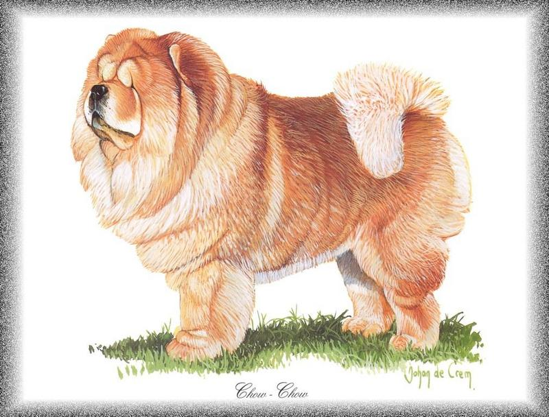 [Painting] Dog - Chowchow (Canis lupus familiaris) <!--개, 차우차우-->; DISPLAY FULL IMAGE.