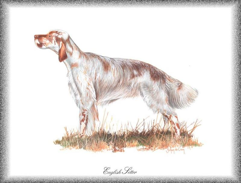 [Painting] Dog - English Setter (Canis lupus familiaris) <!--개, 잉글리쉬 세터-->; DISPLAY FULL IMAGE.