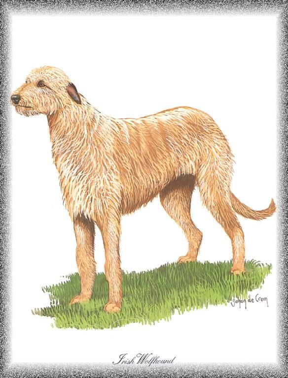 [Painting] Dog - Irish Wolfhound (Canis lupus familiaris) <!--개, 아이리쉬 울프하운드-->; Image ONLY