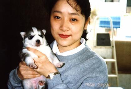 Dog Puppy-husky.jpg