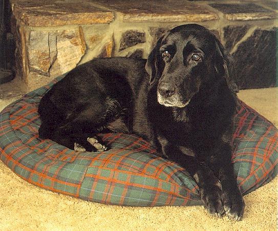 dog-Black Labrador Retriever 1.jpg