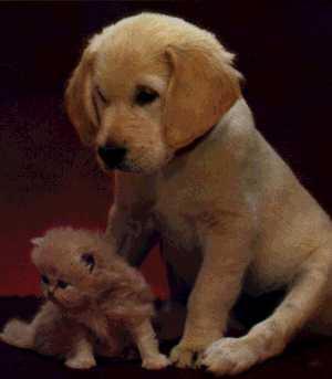 Dog-Puppy-With-Kitten.jpg