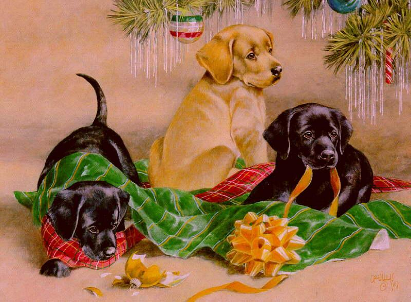 Xmas pup-Yellow and Chocolate Labrador Retriever-dog puppies.jpg