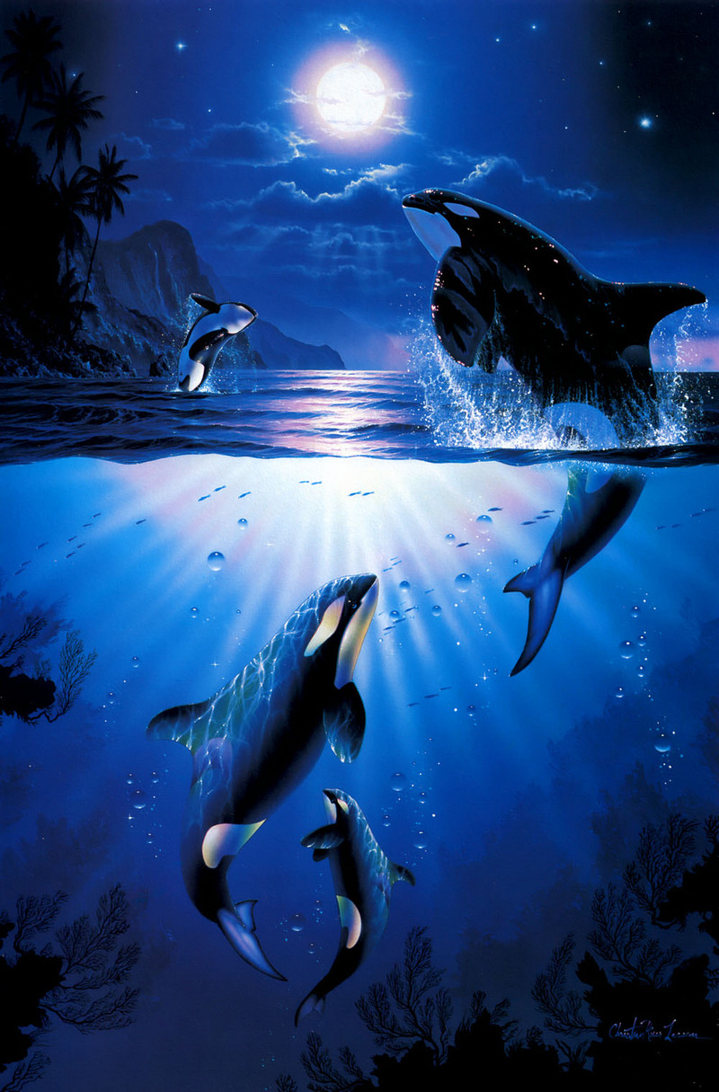 Pod. Two female and one male killer whales hunt together ... |Pod Of Orcas Drawing
