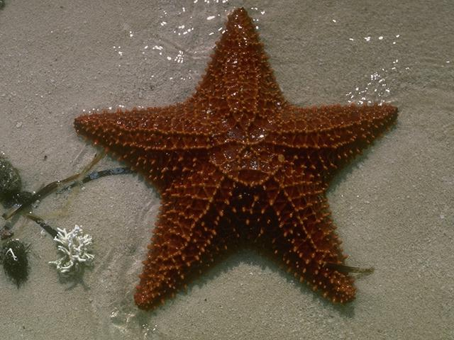 [Underwater] Sea Star <!--불가사리-->; Image ONLY