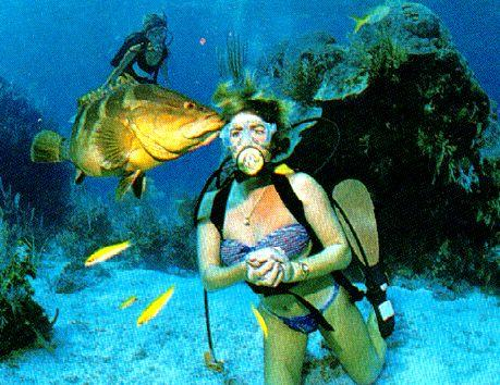 [Underwater Scuba Diving] Lady & Grouper; Image ONLY