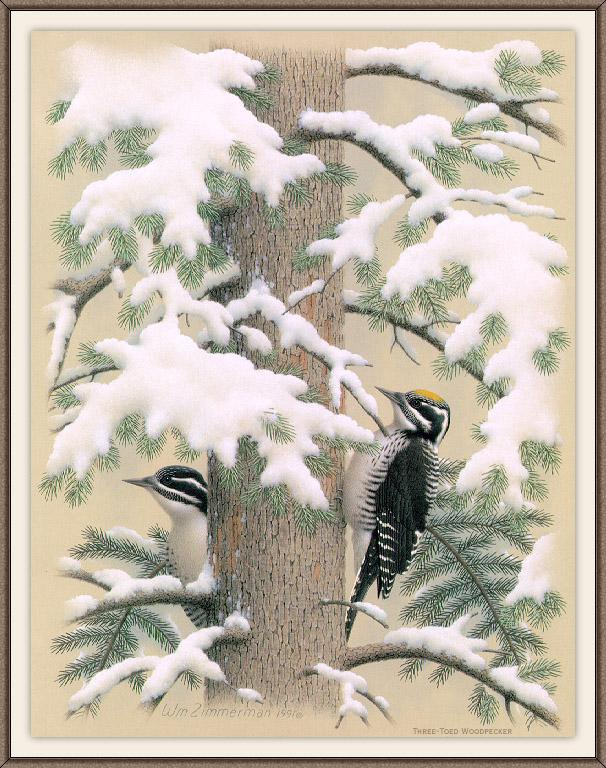 [Animal Art - William Zimmerman] Three-toed Woodpecker pair (Picoides tridactylus) <!--세가락딱다구리-->; Image ONLY
