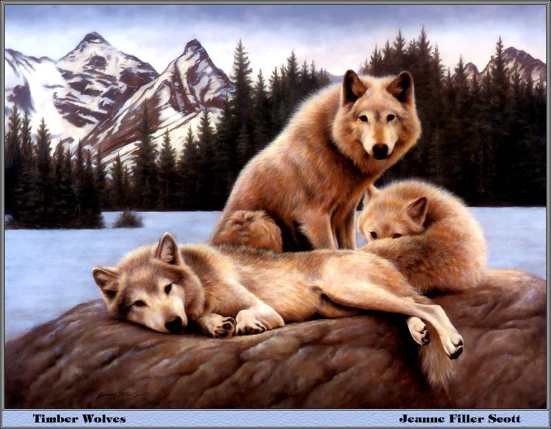 [Animal Art - Jeanne Filler Scott] Timber Wolves (Canis lupus) <!--회색이리-->; Image ONLY