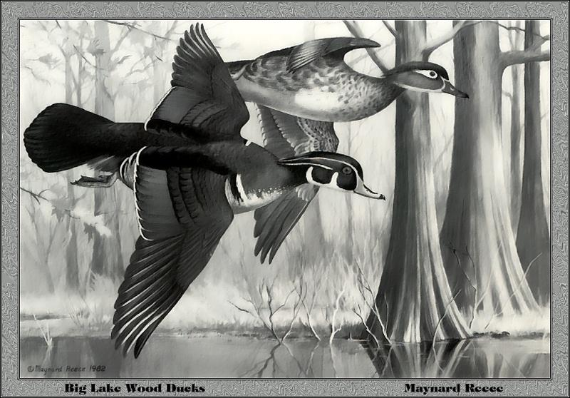 p-ards1982-Big Lake Wood Ducks-Painting by Maynard Reece.jpg