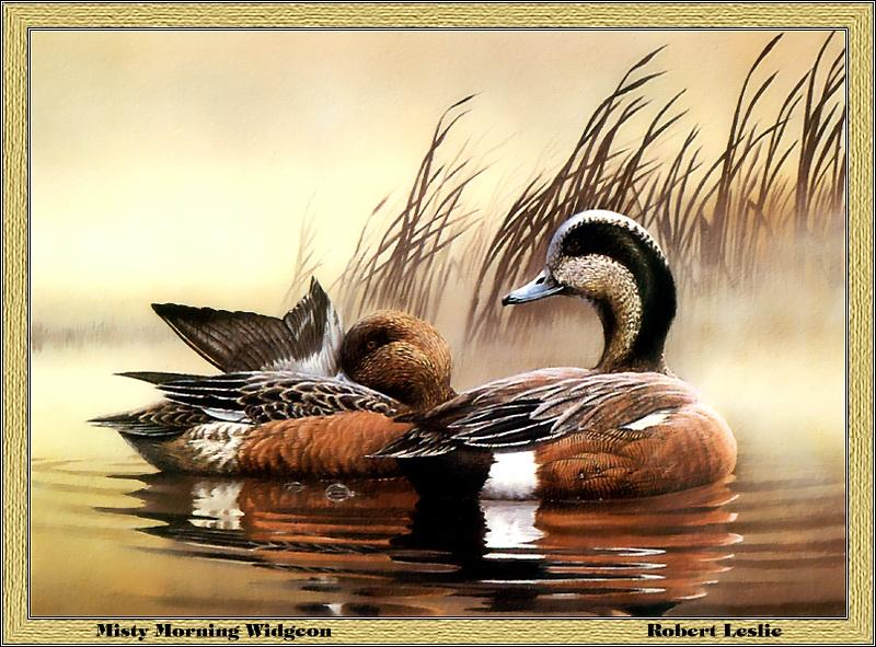 [Animal Art - Robert Leslie] American Wigeon pair (Anas americana) <!--아메리카홍머리오리-->; Image ONLY