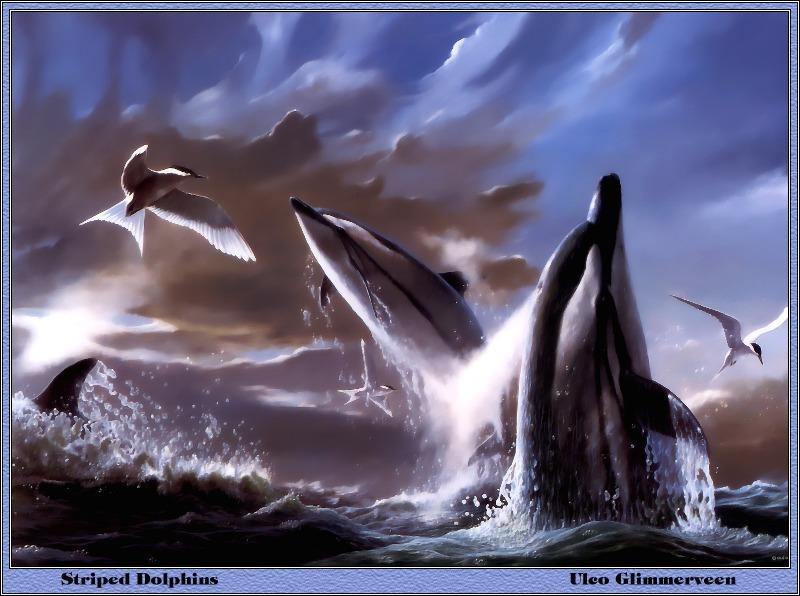p-bwa-24-Striped Dolphins-and-Common Terns-Painting by Uleo Glimmerveen.jpg