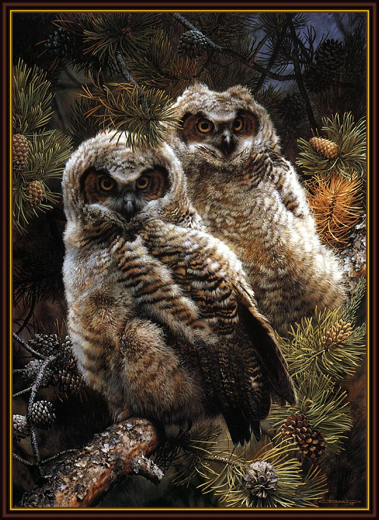 [Animal Art - Carl Brenders] Great Grey Owl chicks (Strix nebulosa) <!--큰회색올빼미-->; Image ONLY
