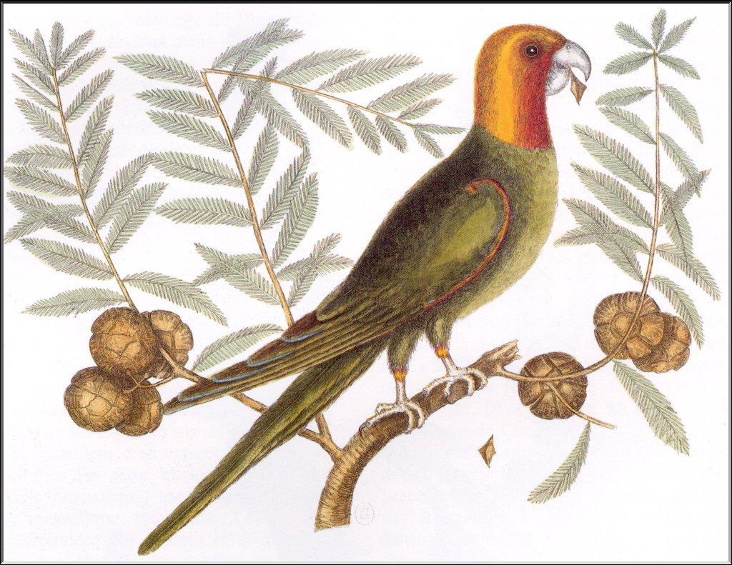 Unknown Artist - Parakeet Training Record