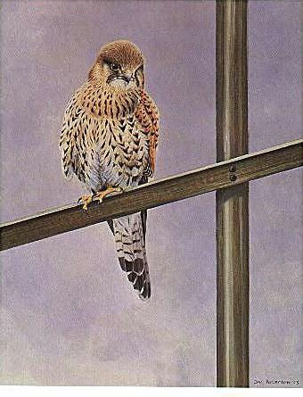 [Animal Art] Common Kestrel (Falco tinnunculus) <!--황조롱이(유럽)-->; Image ONLY