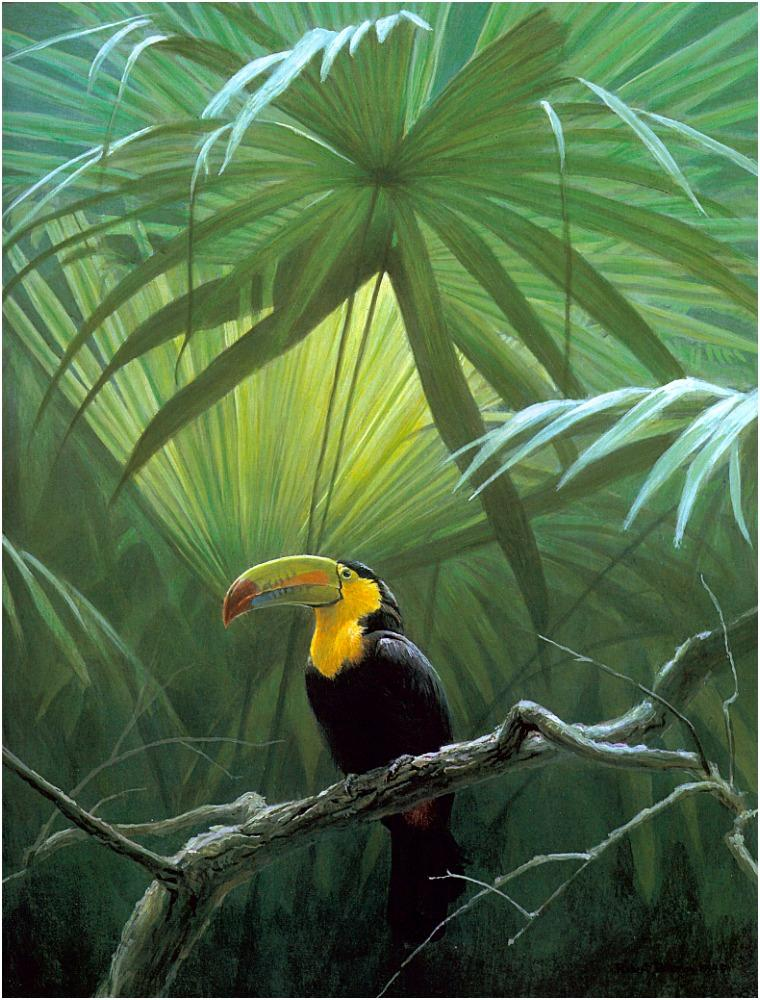 [Animal Art - Robert Bateman] Keel-billed Toucan (Ramphastos sulfuratus) <!--톱부리왕부리(노란가슴왕부리)-->; Image ONLY