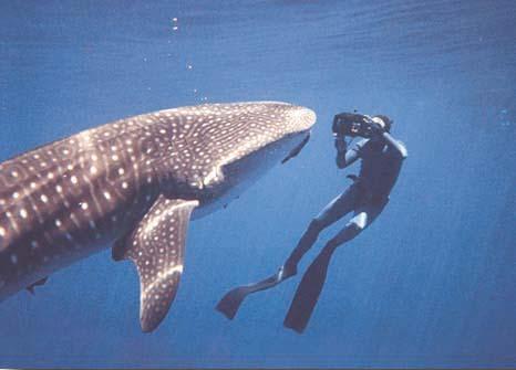whaleshark3.jpg