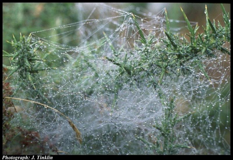 Spider Web <!--거미줄-->; DISPLAY FULL IMAGE.