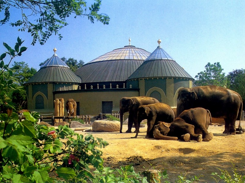 [DOT CD03] Germany - Munich - Hellabrunn Zoo - Asiatic Elephants; DISPLAY FULL IMAGE.