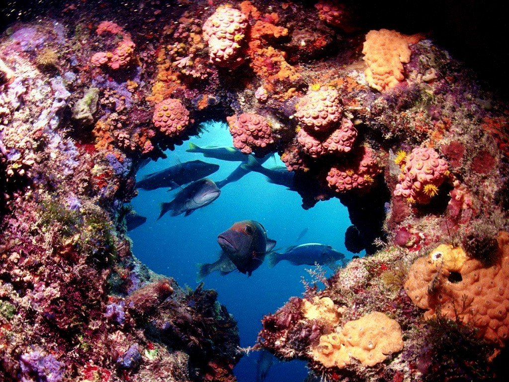 [DOT CD03] Underwater - Great Barrier Reef; DISPLAY FULL ...