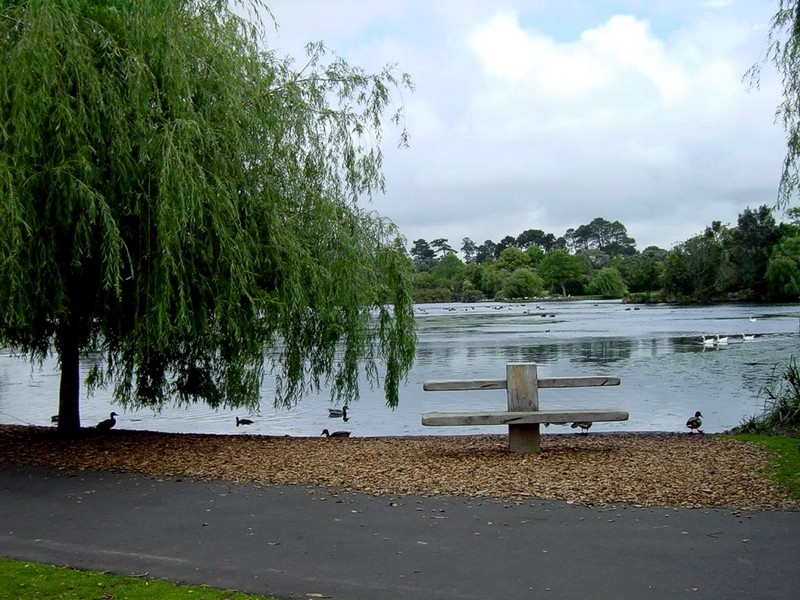 [DOT CD06] New Zealand - Auckland Westwen Park - Ducks; DISPLAY FULL IMAGE.