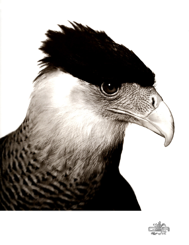 [WYscan CSA Witness] Crested Caracara; Image ONLY