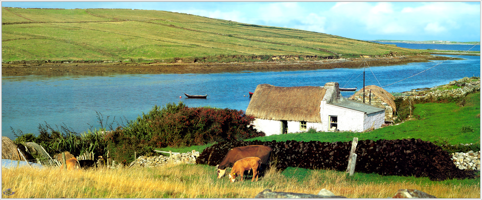 [Minnie Scenes SWD] Cows, Traditional Cottage near Clifden, Ireland; DISPLAY FULL IMAGE.