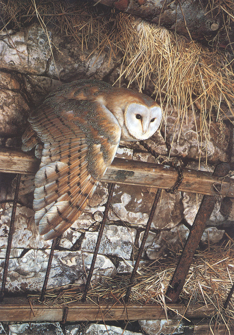 [Carl Brenders - Wildlife Paintings] Mysterious Visitor (Barn Owl); DISPLAY FULL IMAGE.