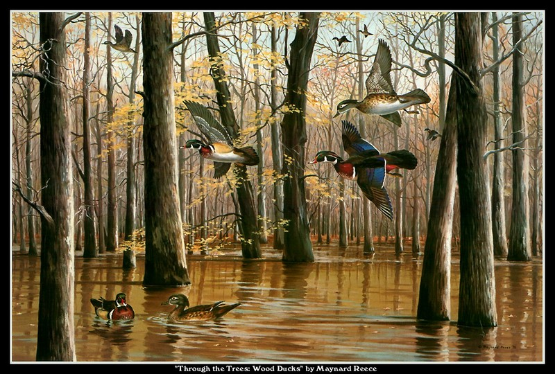 [CameoRose scan] Painted by Maynard Reece, Through the Trees: Wood Ducks; DISPLAY FULL IMAGE.