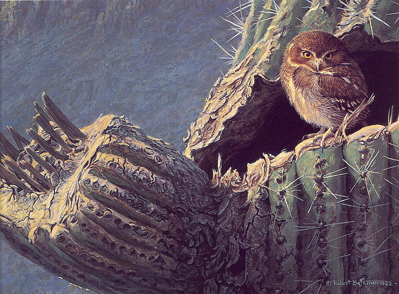 [LRS Art Medley] Robert Bateman, Elf Owl; DISPLAY FULL IMAGE.