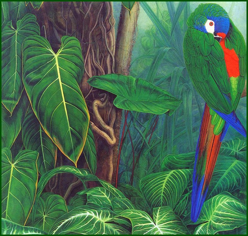 [LRS Animals In Art] Elizabeth Butter Worth, Giant Leaves & Illiger's Macaw; DISPLAY FULL IMAGE.