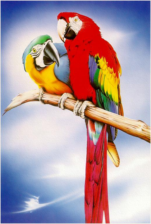 [Animal Art - Ean Taylor] Parrots; Image ONLY