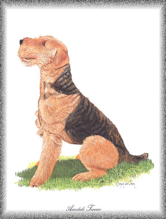 Airedale Terrier <!--에어데일 테리어-->; Image ONLY