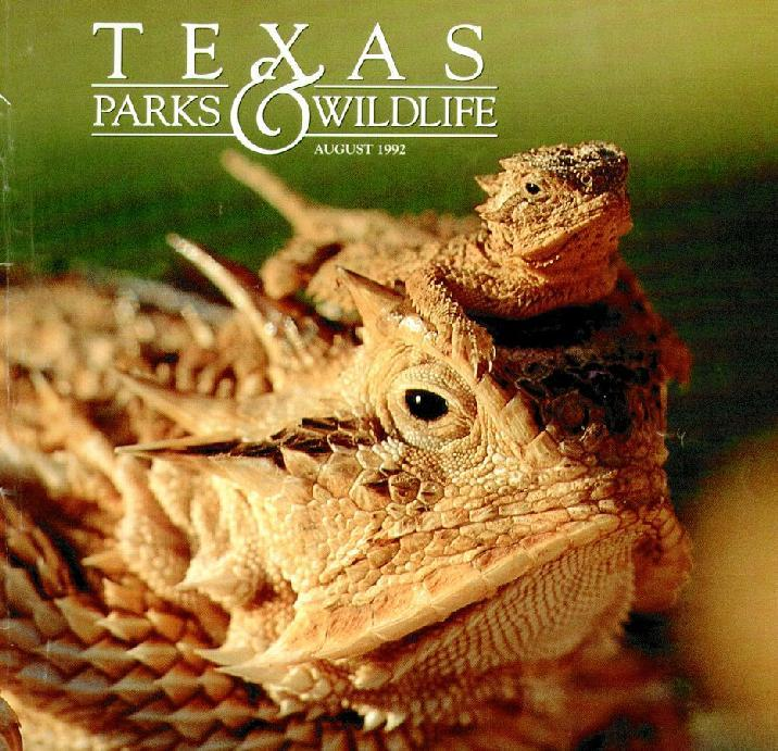 Texas Horned Lizard (Phrynosoma cornutum) <!--텍사스뿔도마뱀-->; Image ONLY