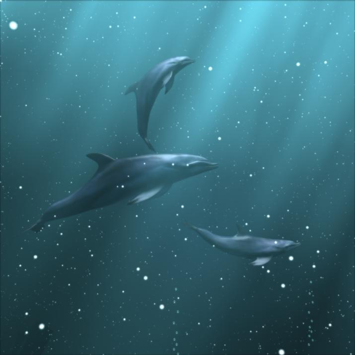 Bottlenose Dolphin (Tursiops truncatus) <!--큰돌고래(병코돌고래)-->; Image ONLY