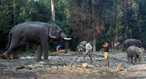INDIA ELEPHANTS [EPA 2006-01-23 13:15]; Image ONLY
