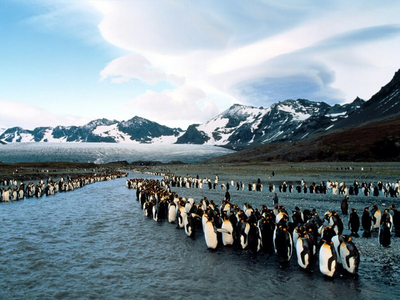 King Penguins at Bank Sunrise, St. Andrews Bay, South Georgia; DISPLAY FULL IMAGE.