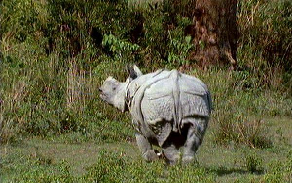 [Wildlife Vidcaps] mm_Indian_Rhinos_05; Image ONLY
