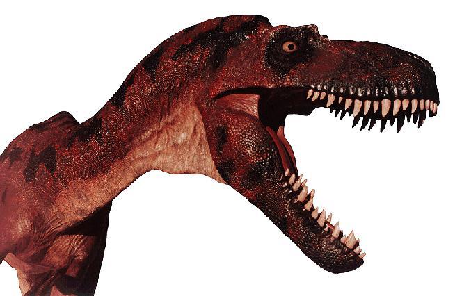 Albertosaurus DINO-head closeup.jpg