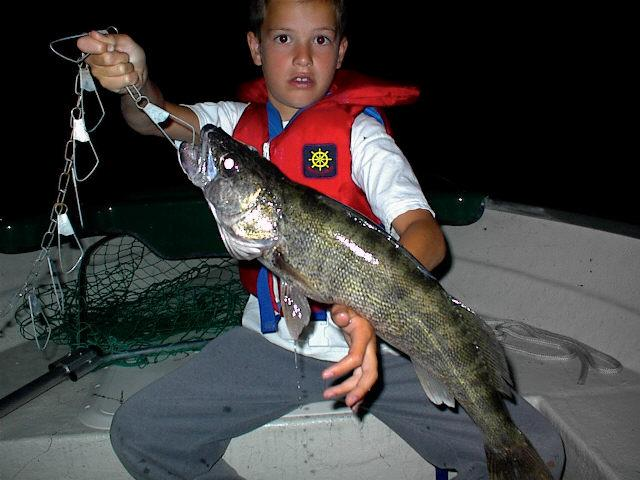 Walleye (Sander vitreus); Image ONLY