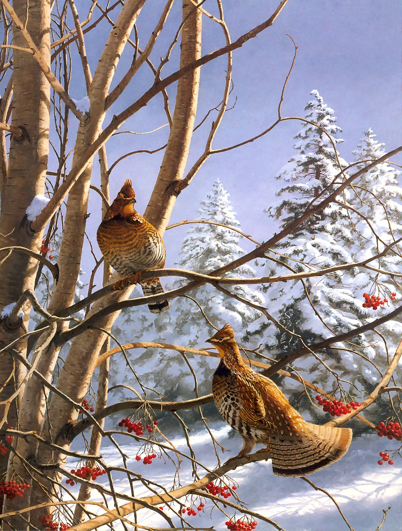 [Consigliere S4 - The Wildfowl of David Maass] Early Winter Morning-Ruffed Grouse; Image ONLY