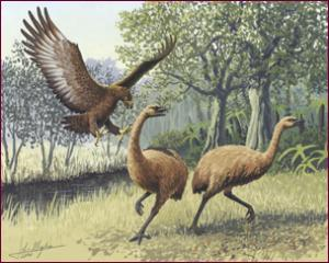Ancient DNA Helps Solve The Legend Of Giant Eagles [ScienceDaily 2006-12-14]; Image ONLY