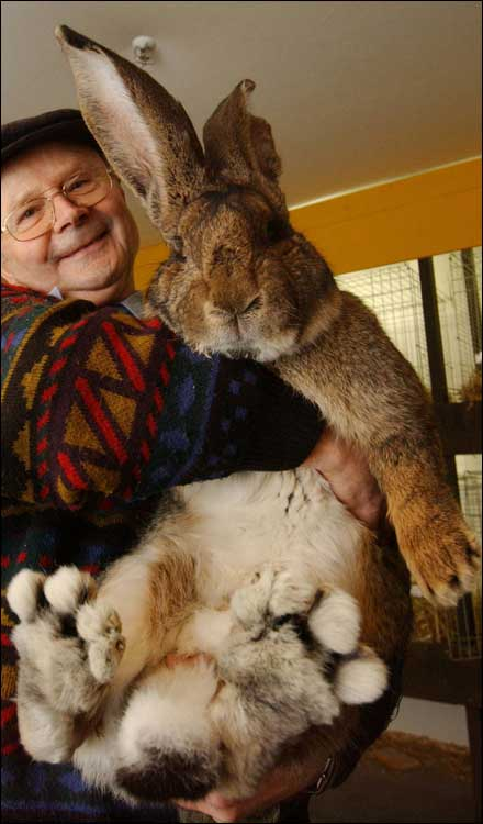 Herman could be 'biggest bunny'  [BBC 2006-02-03]; Image ONLY
