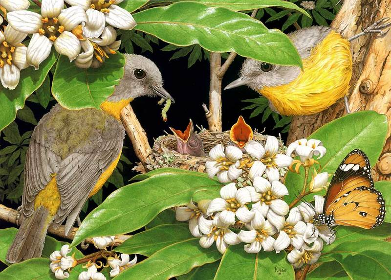 Eastern yellow robin, native daphne, lesser wanderer butterfly; DISPLAY FULL IMAGE.
