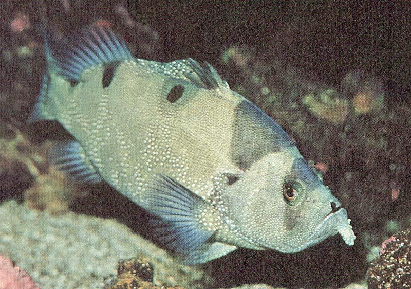 Tropical fish; Image ONLY