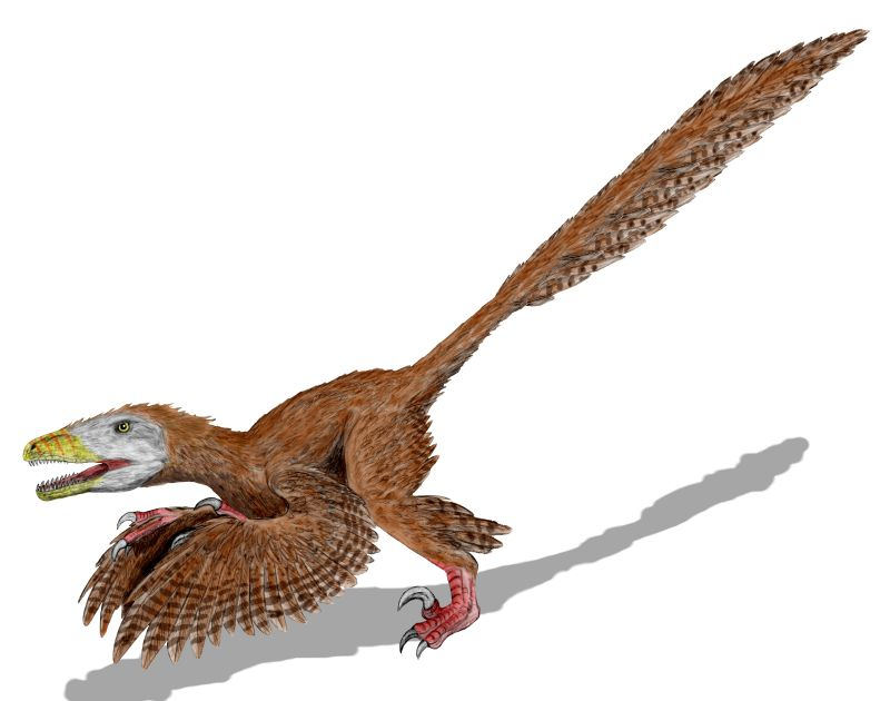Deinonychus - Wiki; Image ONLY