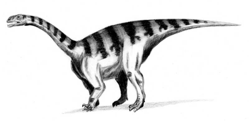 Sellosaurus - Wiki; Image ONLY