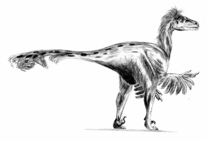 Dromaeosaurus - Wiki; DISPLAY FULL IMAGE.