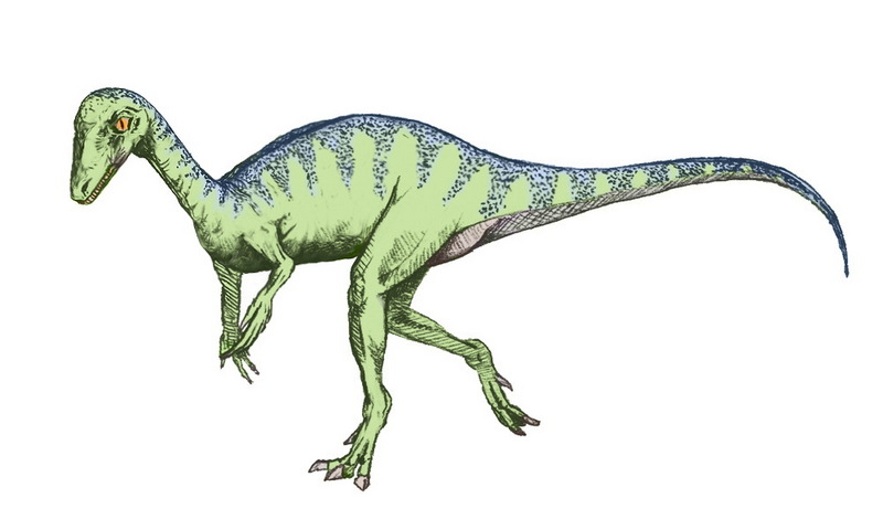 Eopraptor sketch5.jpg