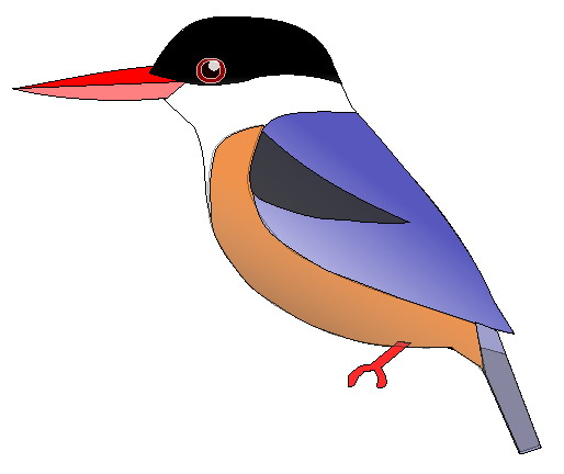 Black-capped Kingfisher (Halcyon pileata) - Wiki; Image ONLY