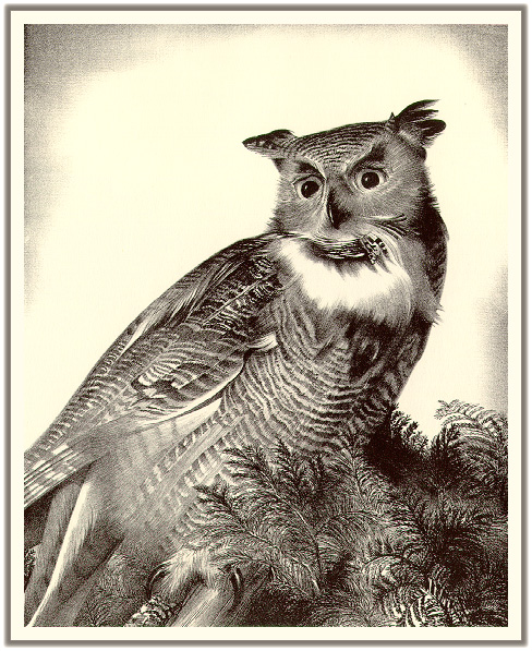 Wengenroth - Great Horned Owl (Art), Bubo virginianus; Image ONLY